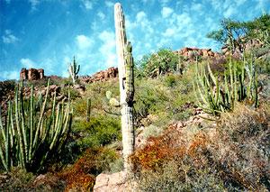 cactus_300
