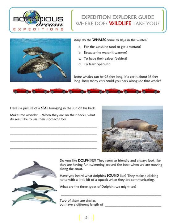 Baja Wildlife Page 2