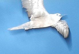bird_275