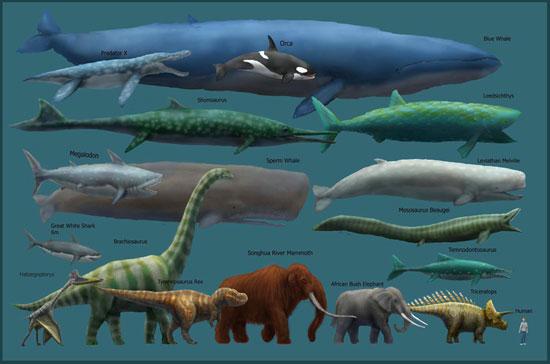 Blue Whale Chart