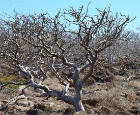4883_tree_275