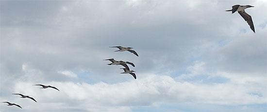 4961_birds_550