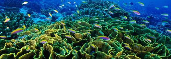 coral_reef_600