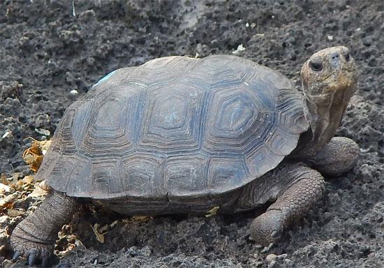 tortoise4_550